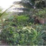 Composition tree plantation
